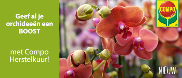 69a57846a88 Vloeibare meststof orchidee | Compo orchideeënmest kopen