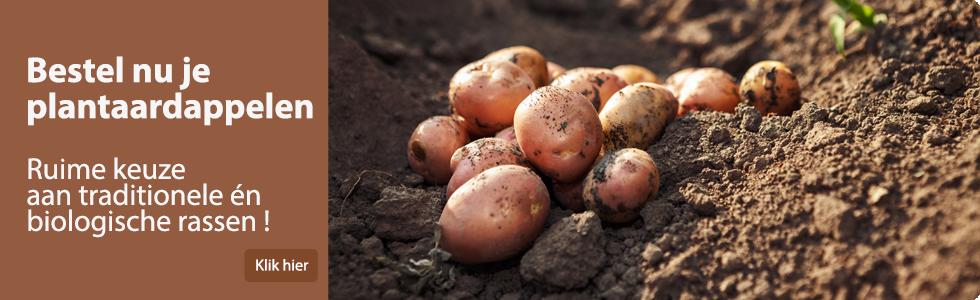 Pootaardappelen online kopen