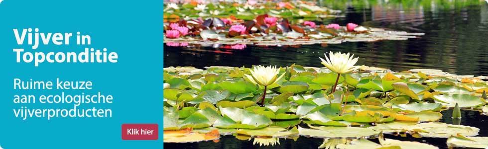 Vijverproducten kopen - groene algen - draadalgen en vijverwater verbeteren