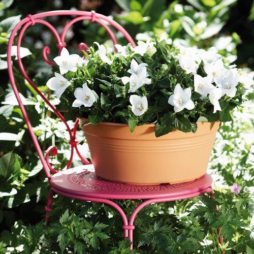 Green Basics bowl