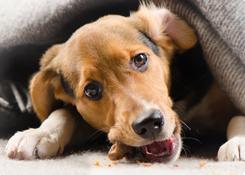 Natuurlijke hondenvoeding