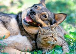 Parasieten bij honden en katten