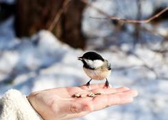 Wintervoeding vogels