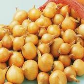 Sjalot Golden Gourmet 500g