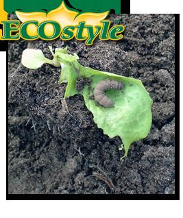 Ecostyle Aaltjes tegen larven in moestuin 10m²