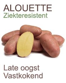 Pootaardappelen Alouette 2,5kg