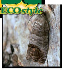 Ecostyle feromoonval tegen fruitmot