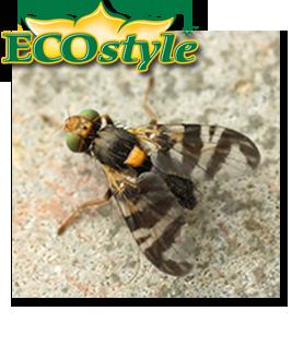 Ecostyle feromoonval tegen kersenvlieg