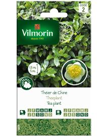 Exotische zaden Theeplant 5st