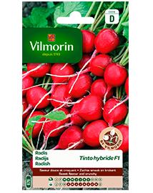 Vilmorin Radijs zaden Tinto F1 10g