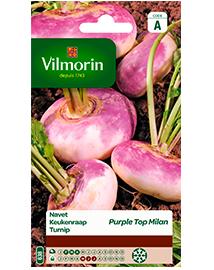 Vilmorin Zaden Keukenraap Purple Top Millan