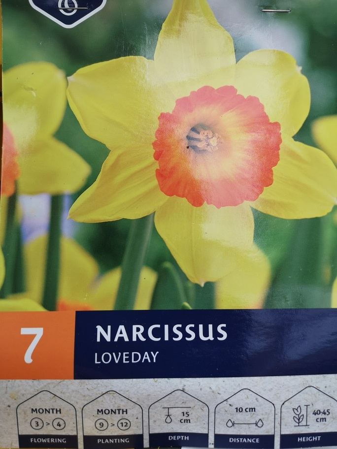 Narcis 'Loveday'