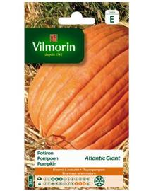 Vilmorin Pompoenzaden Atlantic Giant 3g