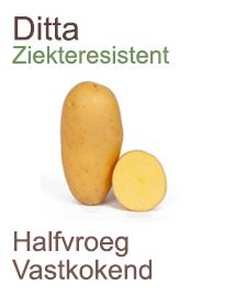 Pootaardappelen Ditta voor het biologisch telen 1kg