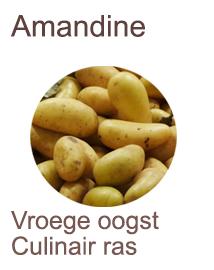 Pootaardappelen Amandine 2,5kg