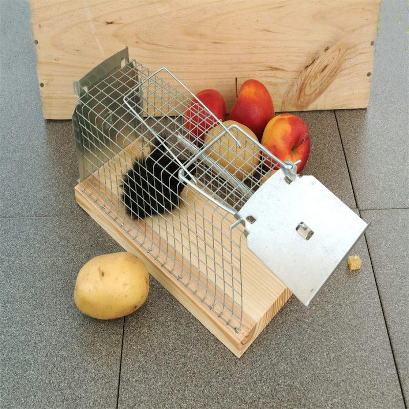 Ratten levend vangen met rattenvangkooi