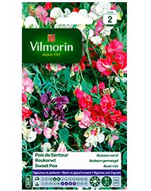 Bloemzaden Reukerwten Buisson Gemengd 8g