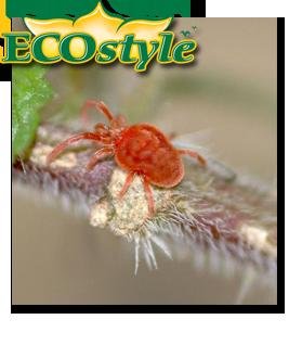 Ecostyle Roofmijt tegen spint en mijt 15 zakjes