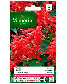 Bloemzaden Salvia Vuurgloed