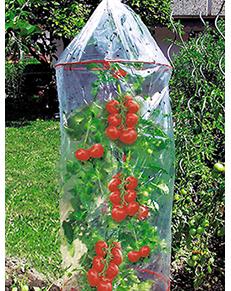 Tomatenhoes voor betere groei