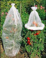 Tomatenhoes tegen vorst, vogels en insecten