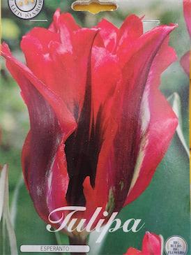 Tulp 'Virdi Esparanto'