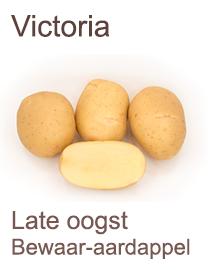 Pootaardappelen Victoria 2,5kg