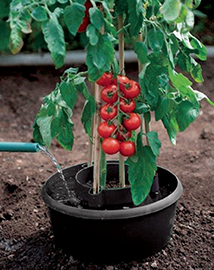 Waterreservoir tomaten met druppselsysteem 3 stuks