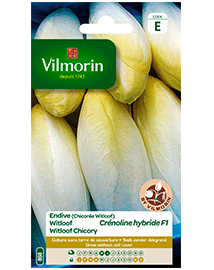 Vilmorin Witloof zaden Crénoline HF1 4g